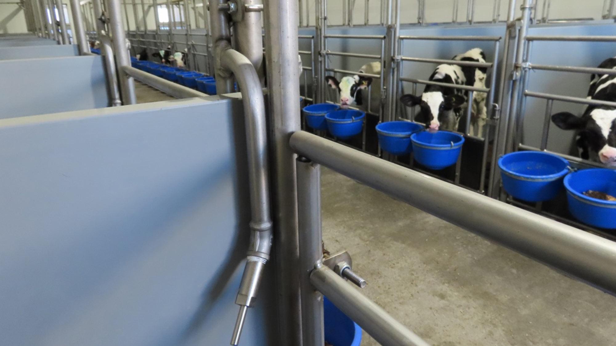 g van beek en zn calf care system Anker Cattle Alberta calves